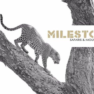 Milestone Safaris & Mountaineering