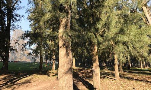 Bosques de Ezeiza