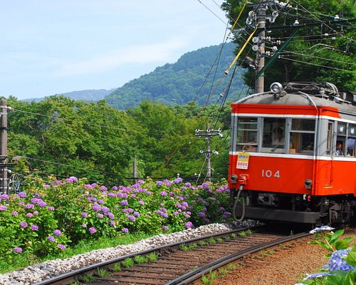 Hydrangea along the Hakone Tozan Railway.