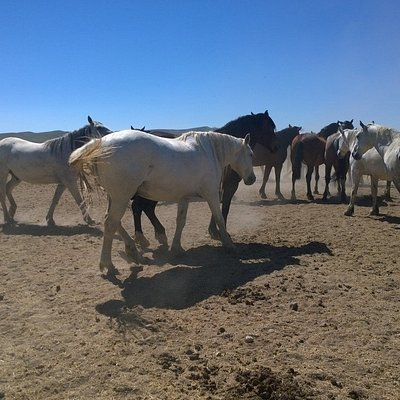 one of the Sanctuary's groups of wild horses