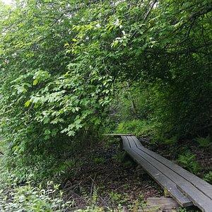 Tourujoen luontopolku