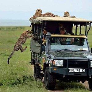 Nairobi natioal park