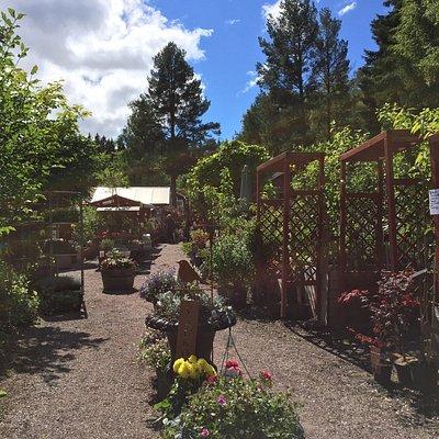 Besök hos Bäsna trädgård