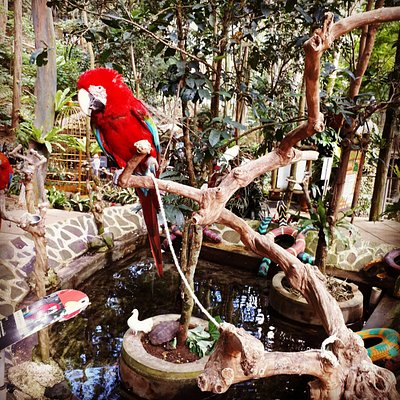 Bird & Bromelia Pavillion at Pramestha Resort Town Jl. Akaza Utama No. 9 , Dago Giri