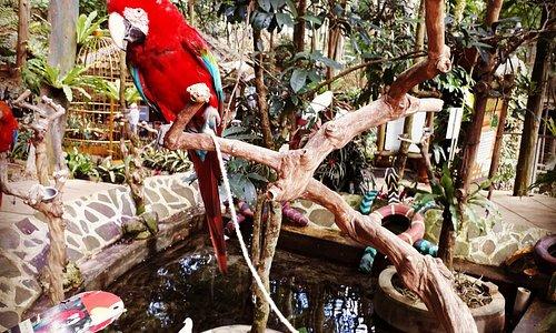 Bird & Bromelia Pavillion at Pramestha Resort Town Jl. Akaza Utama No. 9 , Dago Giri