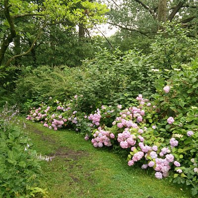 Siegerpark Hortensias in bloom