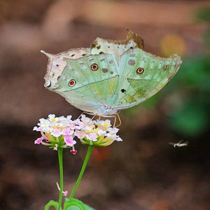 Bellissimo scatto realizzato alla Butterfly House Sardegna