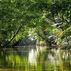 Peace of mind...Tortuguero National Park.