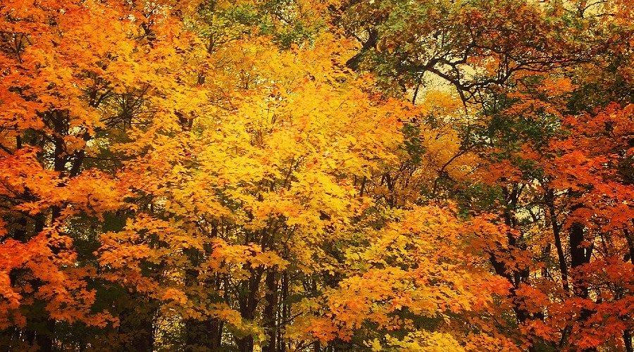 Fish Lake Park fall colors by Ketan Deshpande Minnesota