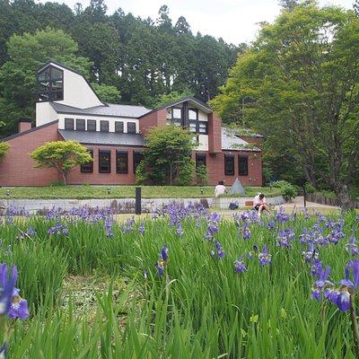 あやめの頃。5月末~6月上旬、庭いっぱいにあやめが咲きます。