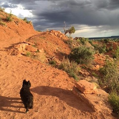 A great trail for dogs and their people - my Snuffles loved it