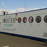 Lobster rearing charity based in seasonal container at North Berwick Harbour