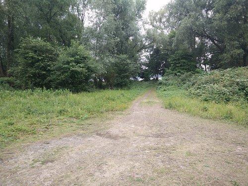 Side path towards the coastline of de Nieuwe Meer
