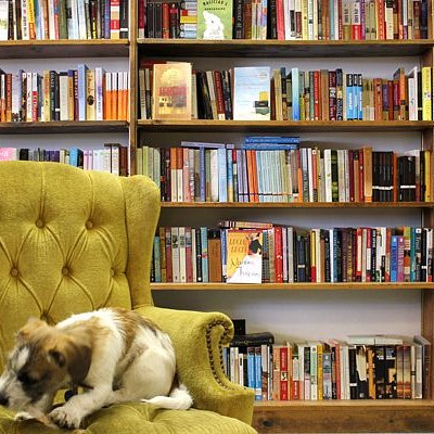 Did I mention this bookstore is dog friendly? Here is a shot inside the store.
