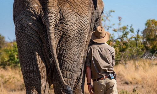 Our biggest privilege is caring for our beautiful African elephants who were destined to be cull