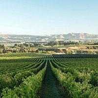 Enjoy the views looking across our award-winning vineyard