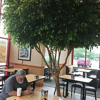 Living tree inside restaurant