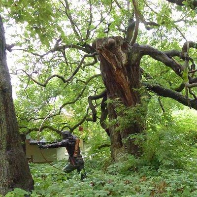 Robin Hood in Sherwood Forest