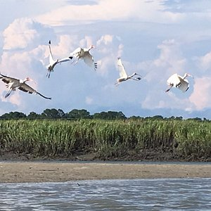 Caught these birds in flight as we approached the sandbar - beautiful sight!