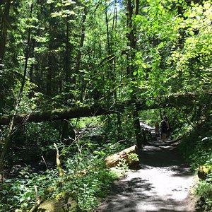 Macleay Trail