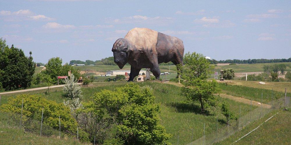"""Largest """"buffalo"""""""
