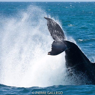 Samana Whale Watching from Punta Cana - Tours & Excursions with Terry