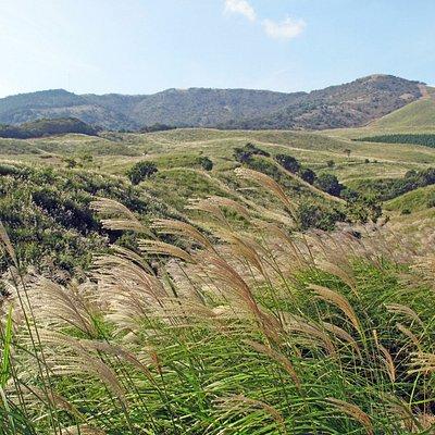細野高原の秋