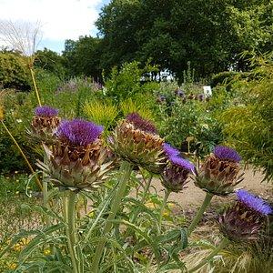 A different botanical garden