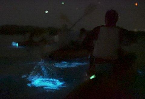 Bioluminescence Kayaking tour with BK Adventure.  Brightest bioluminescence on East Coast of USA