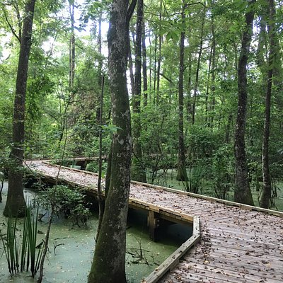 Burden Botanic Gardens Swamp Trail