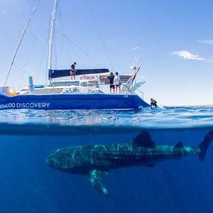 Our Sailboat Windcheetah and a Whale Shark