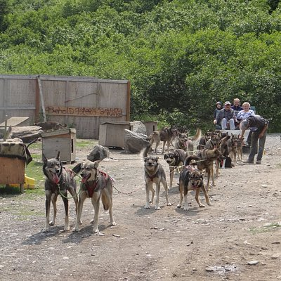 Dog team pulling cart