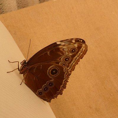 Mezi živými motýli