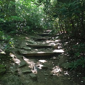 Begining Path for Lookout Trail - see a lot of these stair type trails