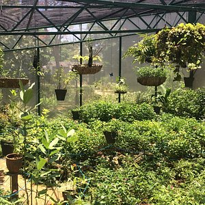 The beautiful butterfly garden at Los Molinos
