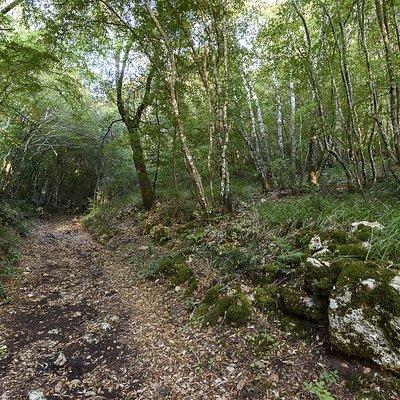 Sentiero nella Riserva Naturale Bosco delle Pianelle