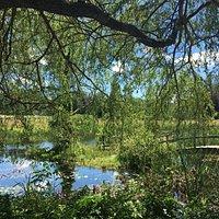 A lovely pond