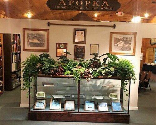 Apopka Museum - Fern Display on feature wall