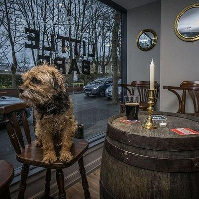 Meet Archie our pub dog.