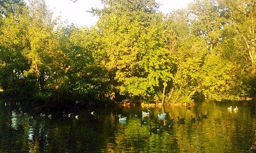 Un ambiente favorevole alla vita di pesci e uccelli acquatici.