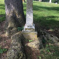 tree wrapped around marker