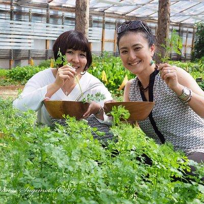 よこみち農場での野菜収穫体験と軽井沢発地市庭 摘みたて野菜のサラダランチ付