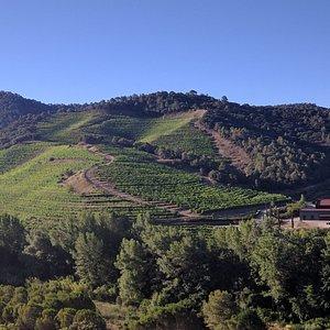Perinet Winery July 2017