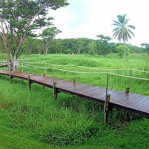 Petite Promenade dans la Mangrove