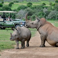 Guest Experience at Shamwari Game Reserve