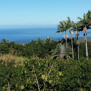 Ocean view from Pele Plantations