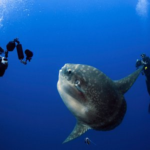Catching Mola Mola at Nusa Penida