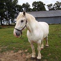 cheval de trait de la ferme