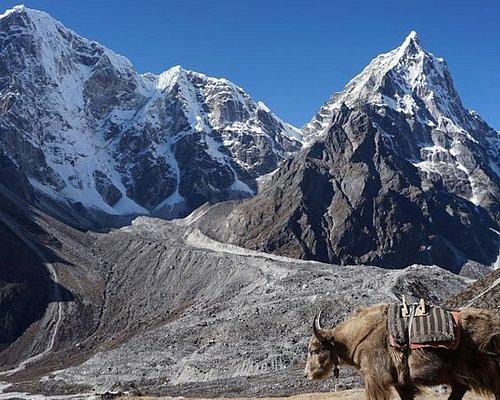 Himalayan Yak and Mount Tawache (6542m) and  Mt. Cholatse (6,440 m.) on the background.