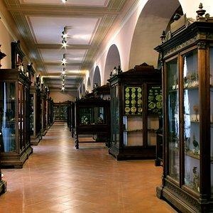 """Museo Anatomico - MUSA - Università degli Studi della Campania """"Luigi Vanvitelli"""""""
